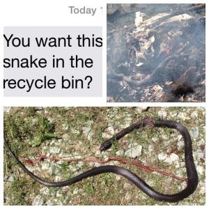 snake cover shot